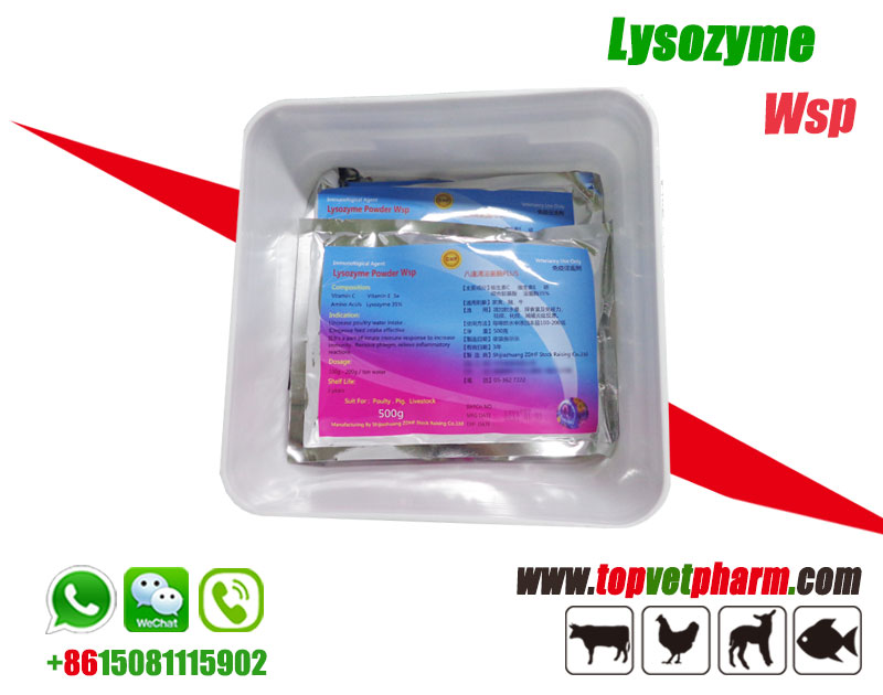 Lysozyme Water Soluble Powder