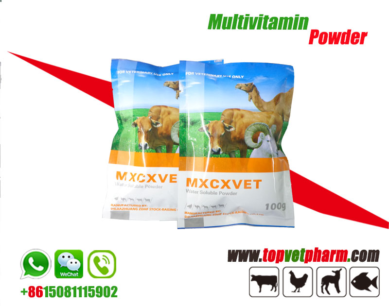 Multivitamin Water Soluble Powder