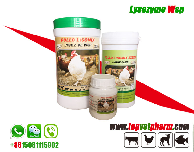 POLLO LISOMIX - Lysozyme Powder