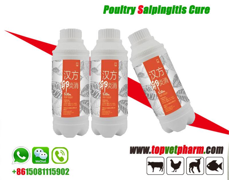 Poultry Salpingitis