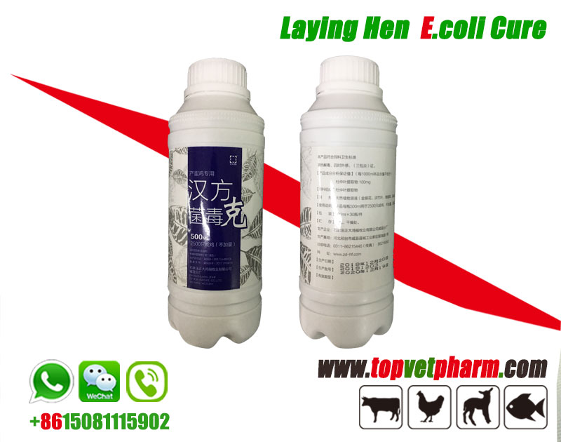 E-coli  Cure Herbal Oral Solution