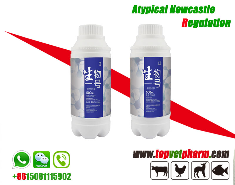 Bioactive functional Peptides
