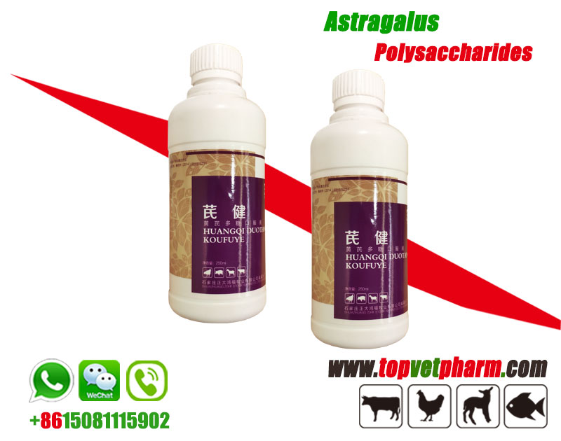 Astragalus Polysaccharide Solution /  Powder