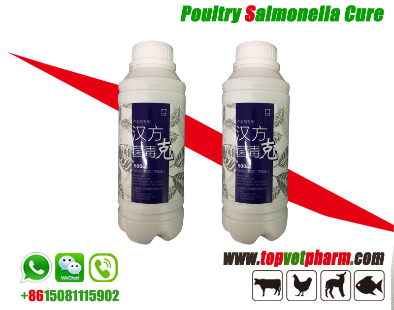 Salmonella Cure