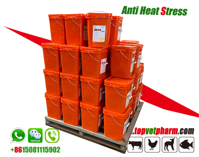 Poultry Anti Heat Stress Powder