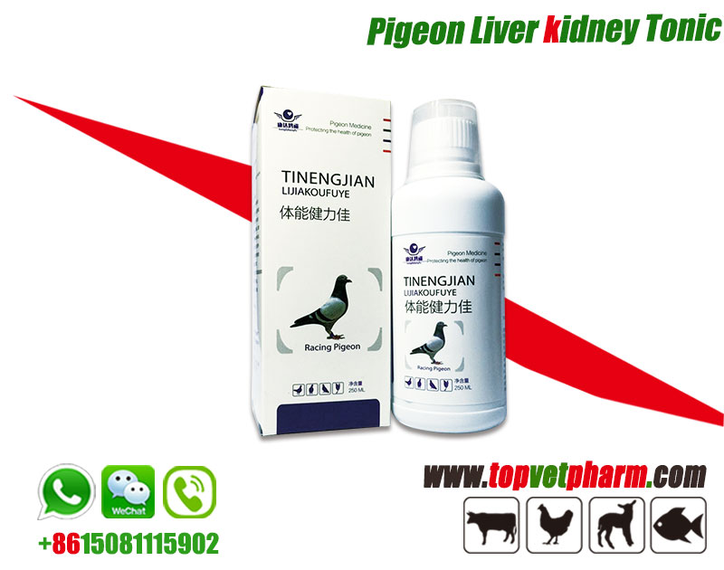 Pigeon Liver Kidney Tonic.