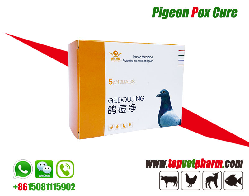 Pigeon Pox Cure