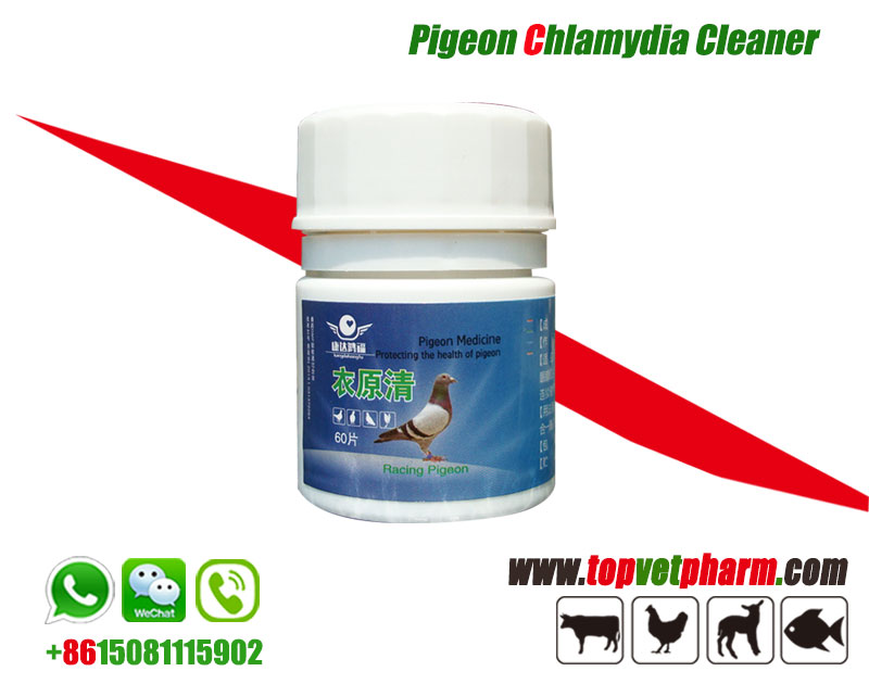 Pigeon Chlamydia Cleaner