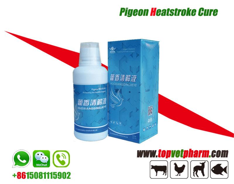 Pigeon Heatstroke Cure