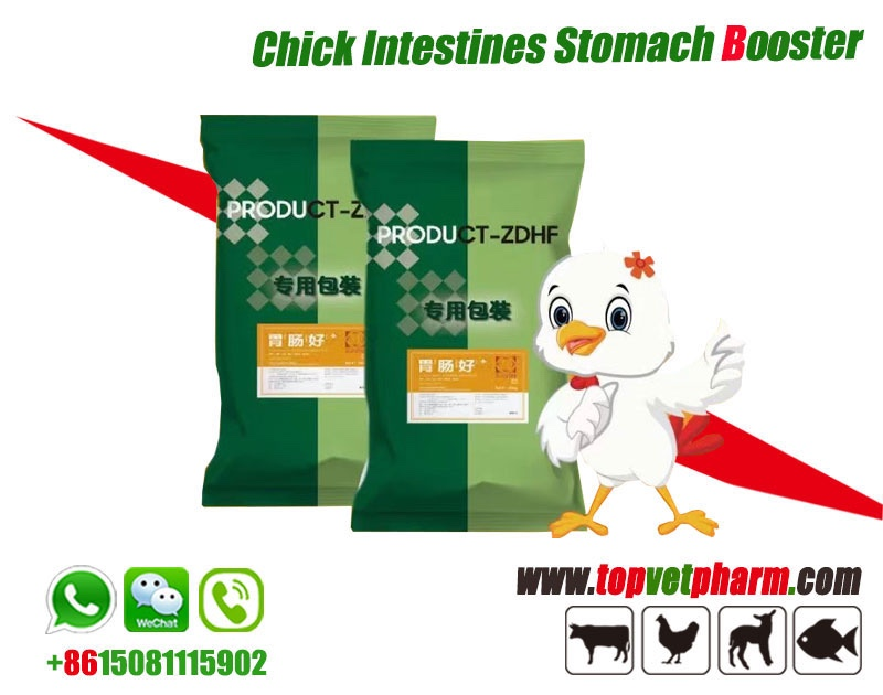 Chick Intestines Stomach Booster